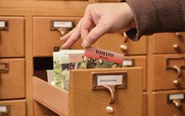 Library Card Catalog Drawer with Seed Packets
