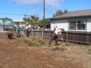 Clearing the Ecologistics Blue C Community Garden
