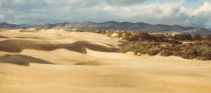 Pismo Dunes, San Luis Obispo County, CA
